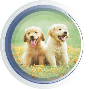 Pet and sport animal testing