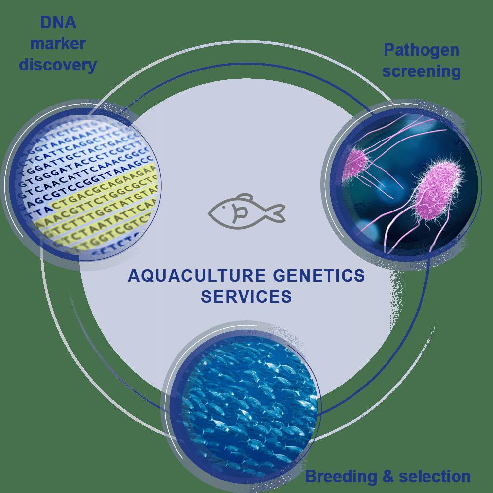 Aquaculture Genetics Services