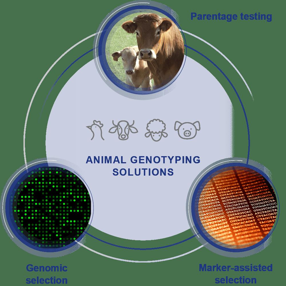 Animal genotyping solutions