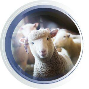 Livestock breeding services