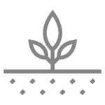 Solutions for plant breeder - plant genomics services